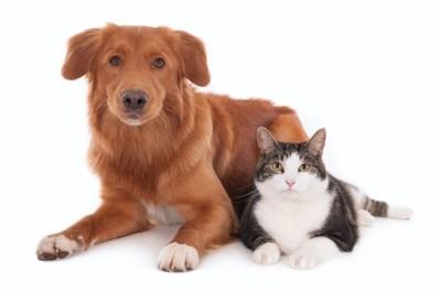 kattehund.jpg